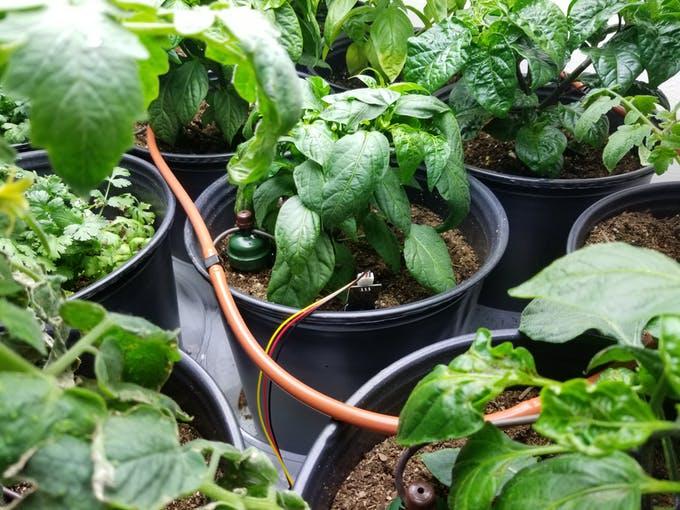 Automatischer Indoor Garten